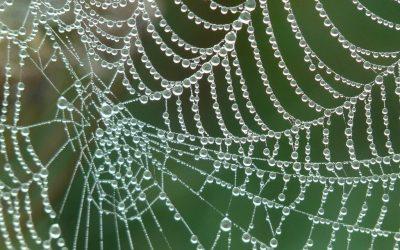 Spider symbolism and Tarot